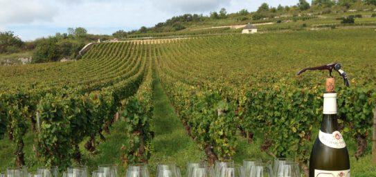 Cursus Online wijncursus (Engelstalig)