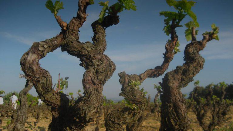 Mood photo for Word een wijnkenner