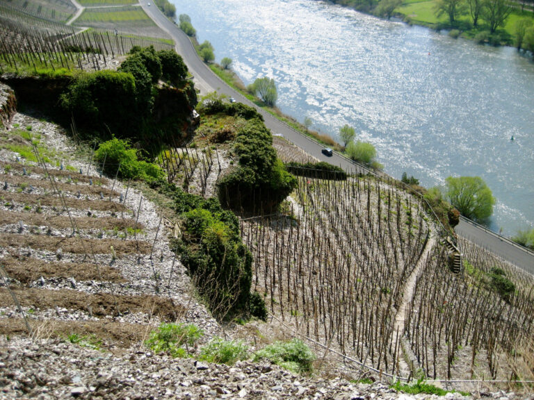 Mood photo for Proefcollege Duitsland wijntrends