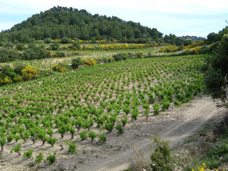 Mood photo for Proefcollege Zuid-Rhône
