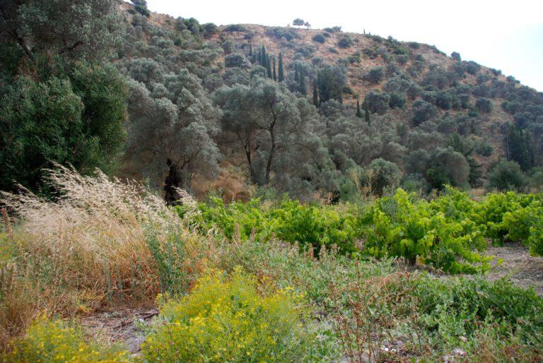 Mood photo for Proefcollege Griekenland – wijnland